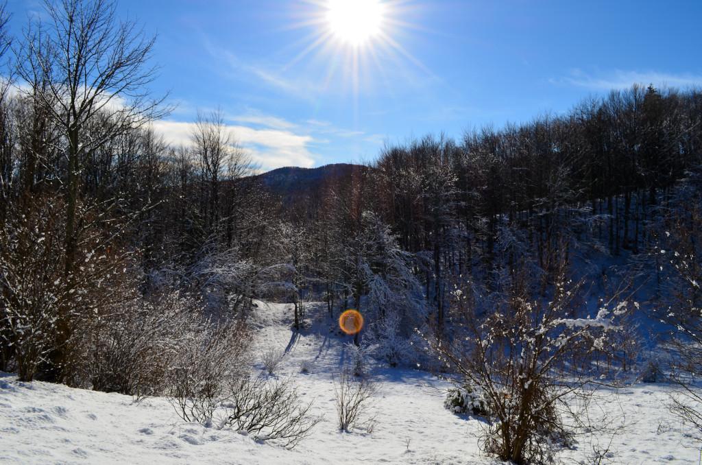 winter wonderland 6