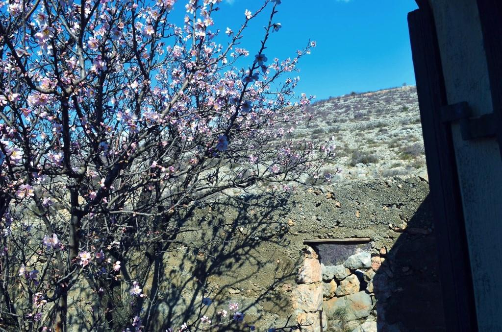 Good morning spring!